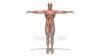 映像CG 人体模型120430-002