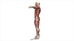映像CG 人体模型120430-016