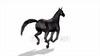CG Horse120324-011