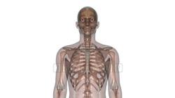 CG  Skeleton120221-002