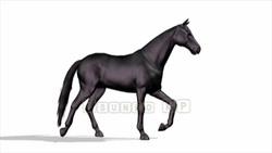 CG  Horse120324-004