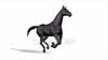 CG Horse120324-009