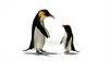CG  Penguin120421-005