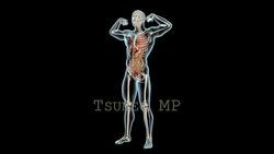 映像CG 人体模型120429-006