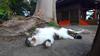 映像実写 ネコ Cat-006