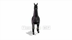 CG  Horse120324-010