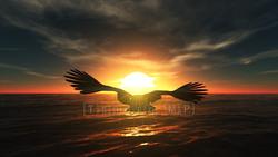 CG  Eagle120305-001