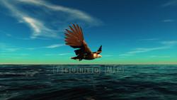 CG  Eagle120308-002