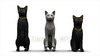 CG Cats120401-003