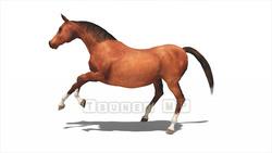 Image CG horses Horse