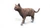 映像CG 歩く猫 Cat120403-004