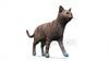 CG Cat120403-005