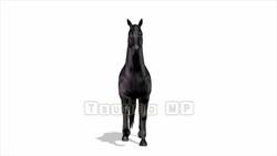 CG  Horse120324-006