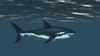 映像CG サメ Shark120518-002