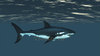 CG Shark120518-002