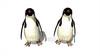 CG  Penguin120421-003
