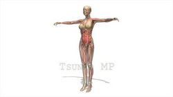 映像CG 人体模型120430-012