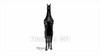 CG Horse120324-002