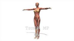 映像CG 人体模型120430-011