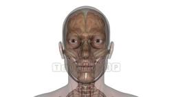 CG  Skeleton120221-003