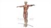 映像CG 人体模型120430-003