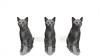 CG Cats120330-004