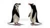 CG  Penguin120422-002