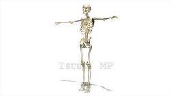 映像CG 人体模型120430-007