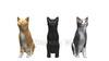 映像CG 立つ猫 Cats120410-005