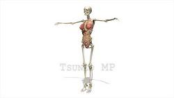 映像CG 人体模型120430-014