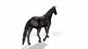 CG Horse120324-007