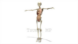 映像CG 人体模型120430-005