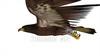 CG  Eagle120418-006